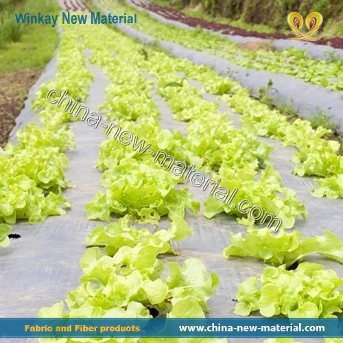 Landscape Cloth In Vegetable Garden